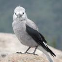 Erin bird