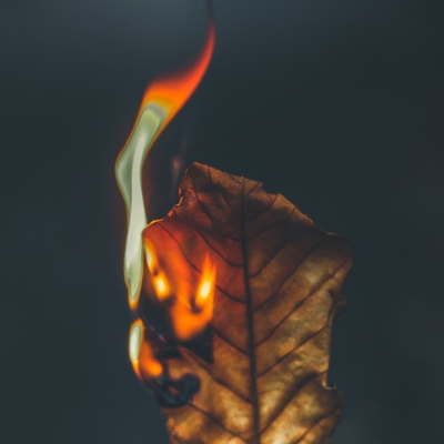 burning leaf