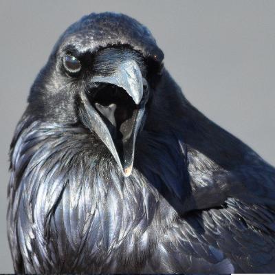 raven croak