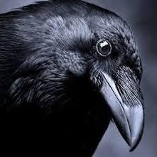 raven peer