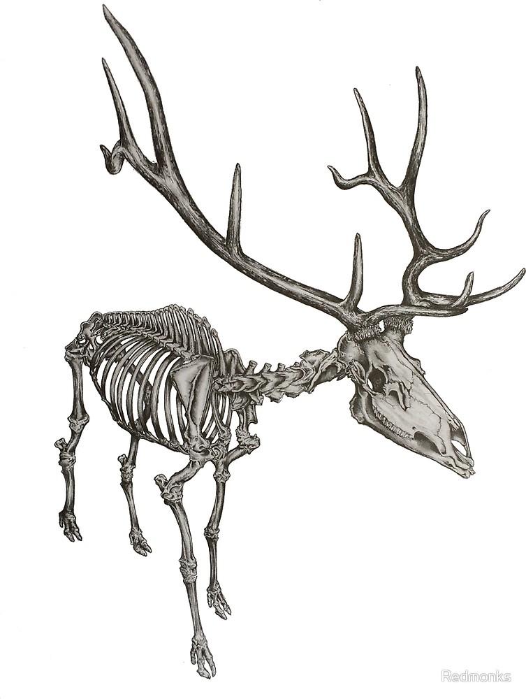 elk skeleton