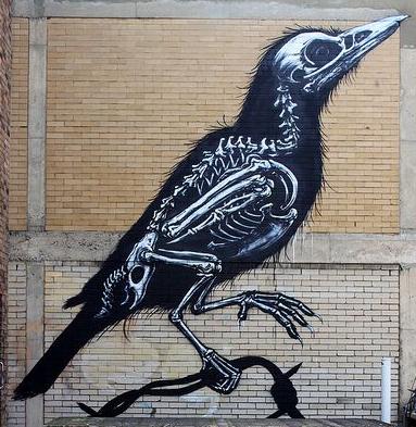 crow wall