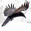 d | wingbeat