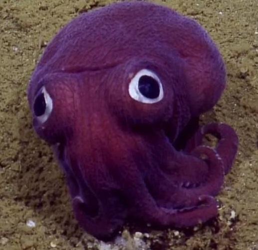 tentacleball
