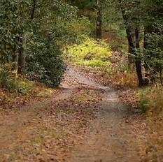overgrown road