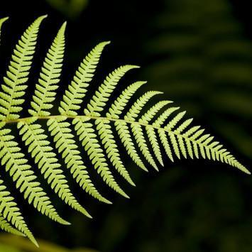landish-fern