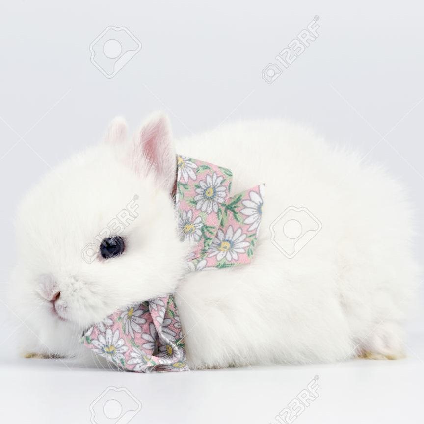 rabbit bow