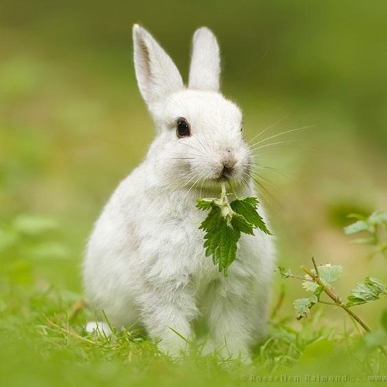 rabbit eat