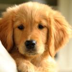 0b - puppy